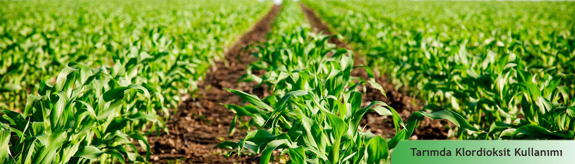 Klordioksit Tarımda Kullanımı